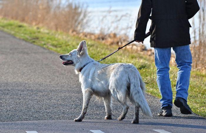 Velika kazna za one koji psa ne vode u šetnju svaki dan