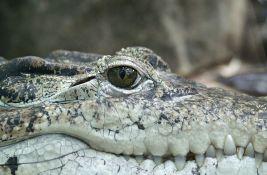VIDEO: Aligator Muja i u 85. godini traži ženku