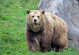 Grizli ubio lovca