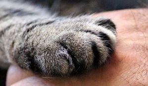 Dve mačke pozitivne na koronu, virus im preneo vlasnik
