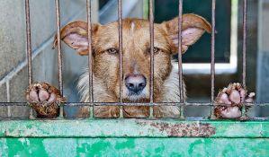 Psi i dalje u opštinskom azilu koji je pre mesec dana zatvoren zbog loših uslova