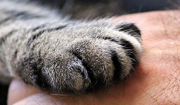 Kineska kompanija klonirala prvu mačku