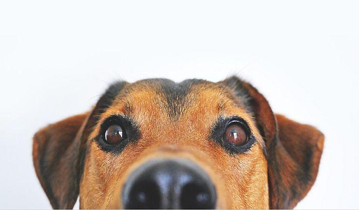 Španski grad uvodi taksu na pse kako bi naplatili troškove čišćenja za njima
