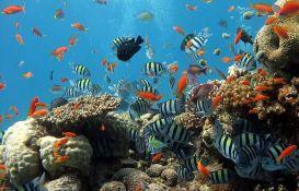 Istraživanje pokazalo: Većina ili svi koralni grebeni će nestati do 2100. godine