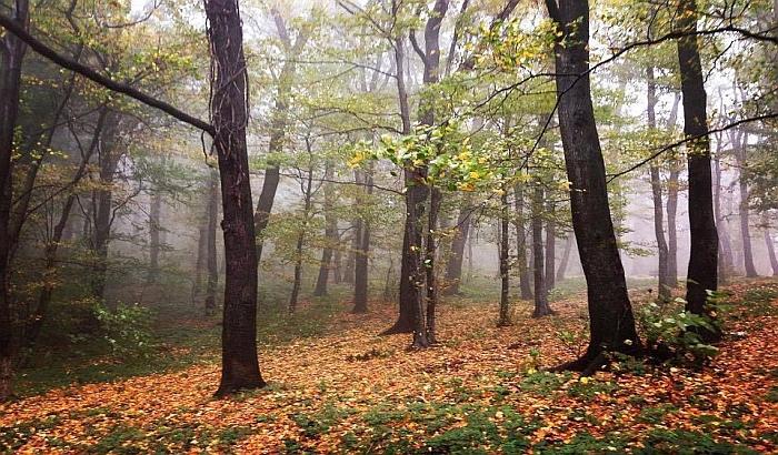 Uskoro prikupljanje potpisa za zaštitu šuma Fruške gore