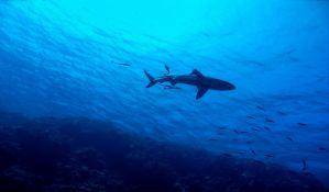Još jedan napad ajkule u Australiji, preminuo ronilac