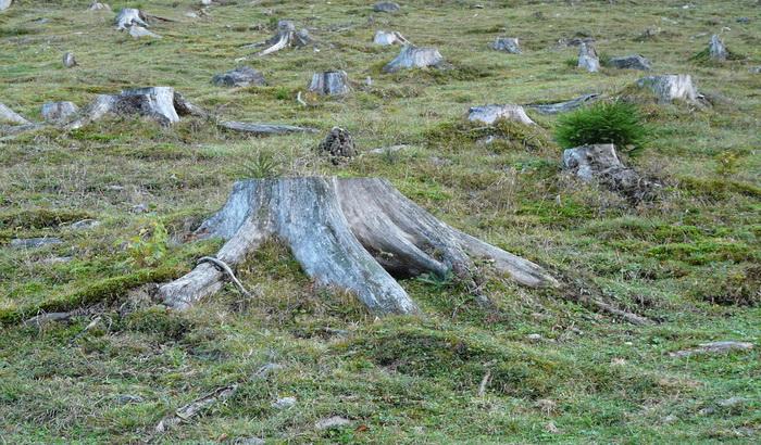 Posekli oko 540 stabala, prijave protiv dvojice mladića