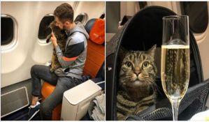 Pokušao da prokrijumčari debelog mačka u kabinu aviona