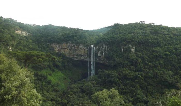 Brazil gubi gotovo 10.000 kvadratnih kilometara prašuma godišnje