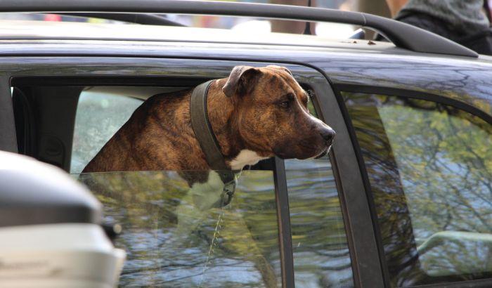 Prva tužba za prijavljivanje lažnog ujeda psa