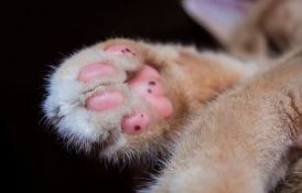 Skoro 90 mrtvih mačaka pronađeno u jednoj kući