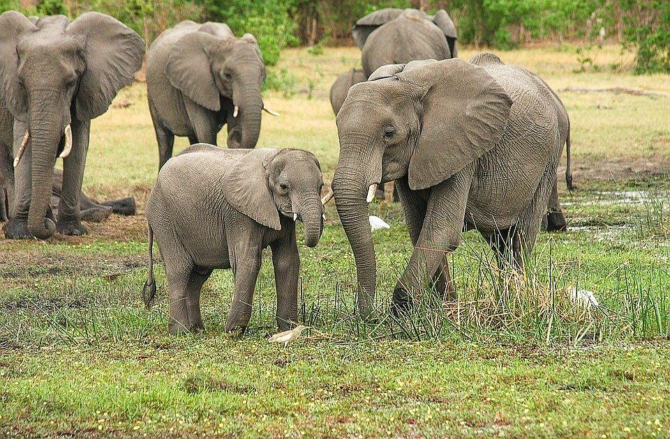 Grom ubio krdo slonova