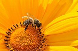 Uprava za zaštitu bilja i SPOS: Sprečimo trovanje pčela