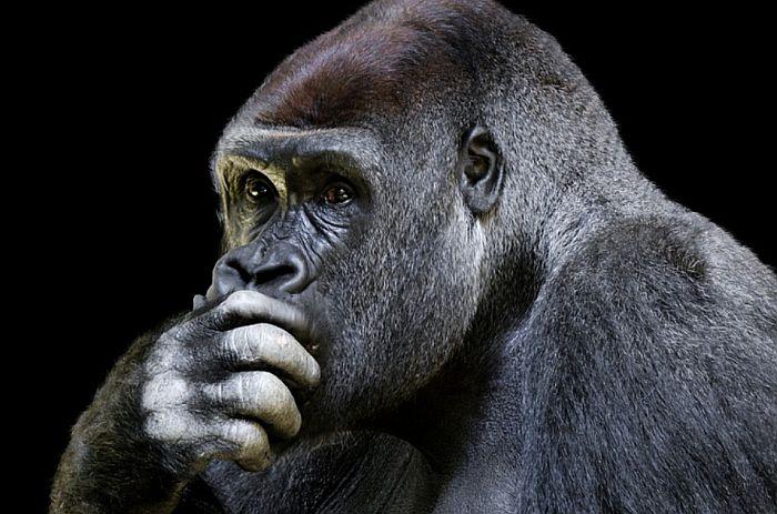 Naučnici: Mozak modernog čoveka razvio se kasnije nego što se misli