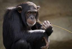 Nestalo više od 50 odsto životinja