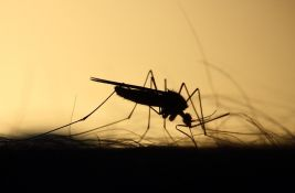 Najezda komaraca u Sremskim Karlovcima: Građani nemaju mira,