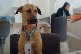 VIDEO: Pas lutalica dobio posao u autosalonu jer je svaki dan svraćao
