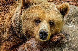 VIDEO: Medved jurio muškarca ulicama sibirskog grada
