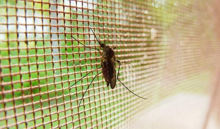 Ciklonizacija prskala komarce na sremskoj strani grada, Novosađani kašljali i kijali
