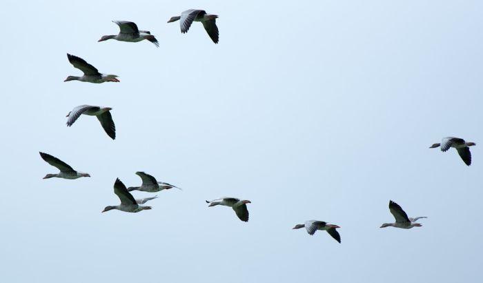 Populacija ptica u Severnoj Americi smanjila se skoro za trećinu