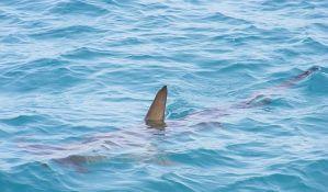 Kod Šibenika uhvaćen morski pas težak pola tone
