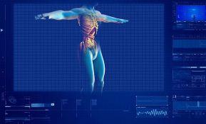 Otkriven novi tip krvnih sudova u kostima čoveka