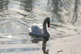 Inspekcija: U Belegišu ugroženo stanište zaštićenih vrsta