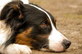 Pas spašen zahvaljujući dronu