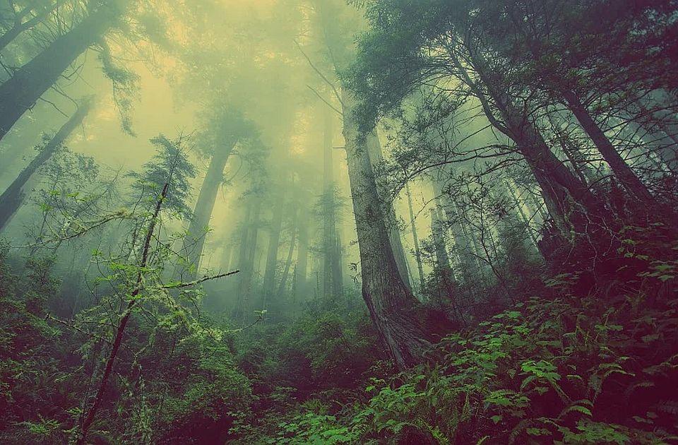 Za 20 godina posečeno šest puta više šuma nego što je posađeno