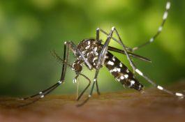 Od danas tretmani protiv komaraca iz vazduha i sa zemlje