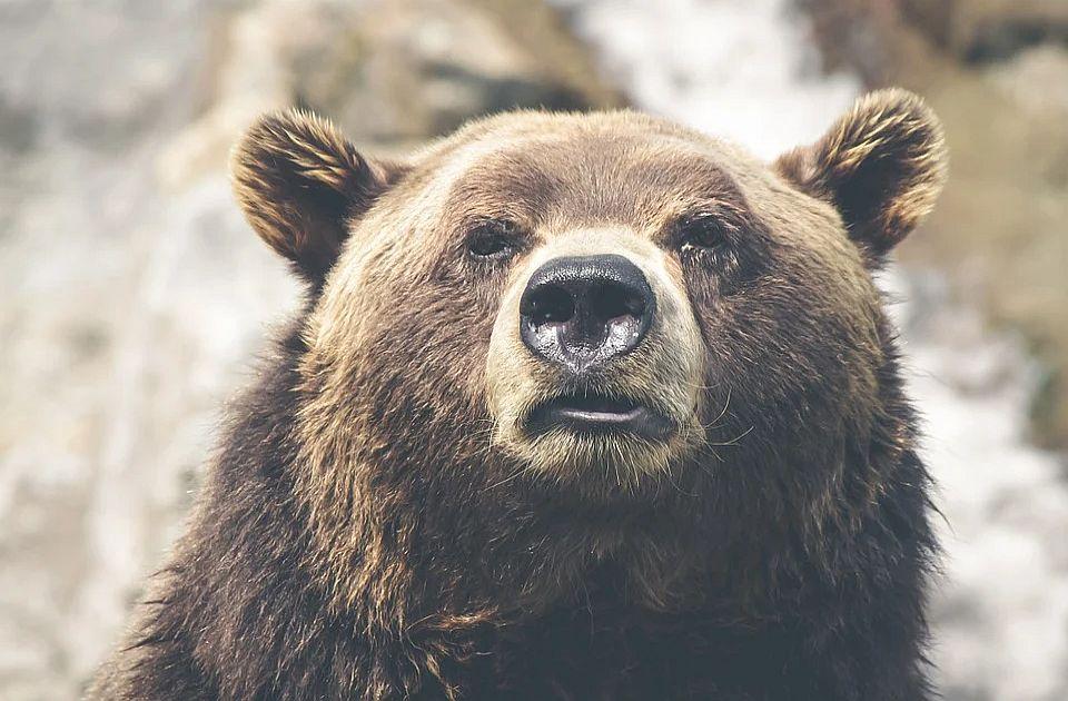 Medved teško povredio planinara u parku Jelouston