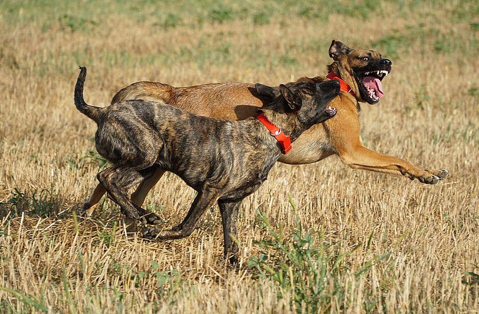 Komšijski psi izujedali dve devojčice i njihovog dedu u selu kod Iriga