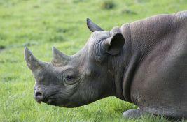 U Indiji spaljeno oko 2.500 starih rogova povodom Svetskog dana nosoroga