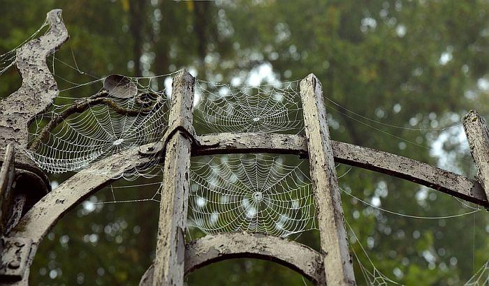 Novootkrivene vrste paukova nazvane po legendama metal muzike