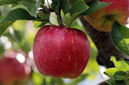 Srbija zatrpana jabukama: Pravilnik o izvozu zarobio ih u hladnjačama, a marketi ih uvoze iz Poljske