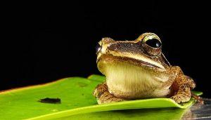 Beč ima tunele kojima žabe i druge životinje bezbedno prelaze kolovoz