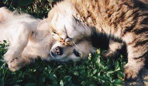 Ljubimci blagosiljani u crkvi na dan zaštitnika životinja