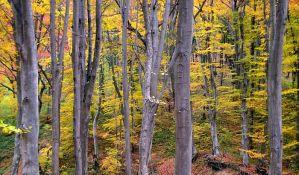 Vojvodina jedan od regiona u Evropi sa najmanje šuma