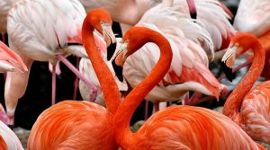 Desetine flaminga uginule od trovanja olovnom sačmom