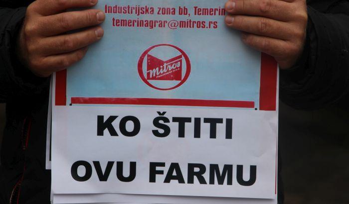 FOTO Temerinci traže iseljenje farme svinja: Inspektori, jadni i nesretni, ništa ne smeju da preduzmu
