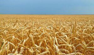 Na severu Bačke slab rod pšenice