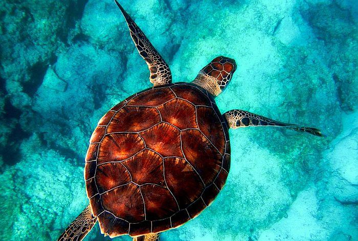 Oko 300 ugroženih kornjača ubijeno u Meksiku