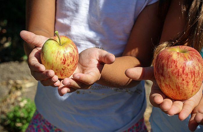 Deca kroz zdrave obroke u školi i edukaciju uče da poštuju poljoprivrednike