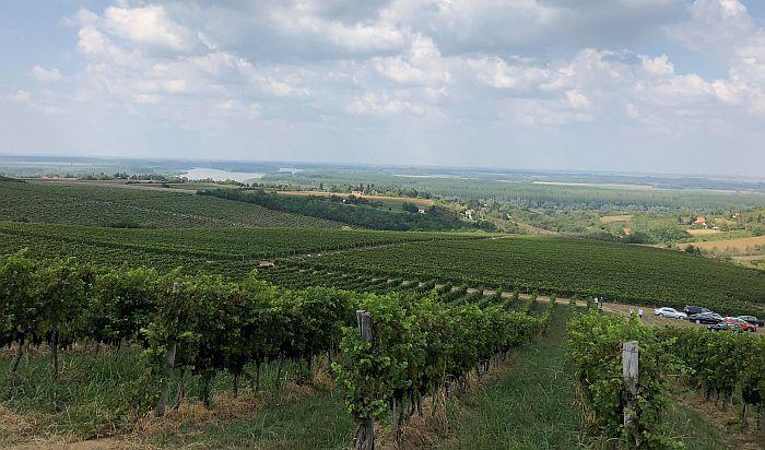 Sremski Karlovci dobijaju institut za vinogradarstvo i vinarstvo