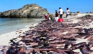 VIDEO: Voda u Čileu izbacila hiljade mrtvih sipa