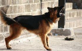 Gradonačelnik zabranio psima da laju