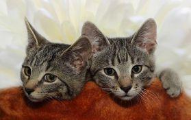 Sve veće interesovanje za kloniranjem kućnih ljubimaca