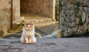 Mačke u Vuhanu bile zaražene virusom korona