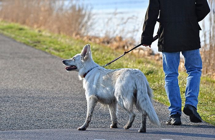 Šetanje pasa dozvoljeno od 23 do 1h i nedeljom od 8 do 10 časova