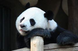 VIDEO: Radostan dan u Tokiju - rođeni panda blizanci